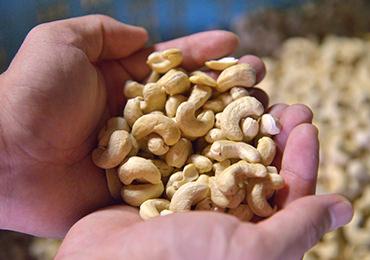 焙煎前の、生のカシューナッツ