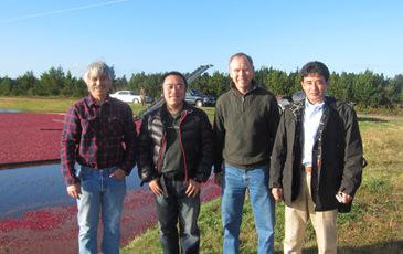 アメリカオレゴン州のクランベリー畑にて