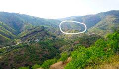 丸の中がイチジク村です